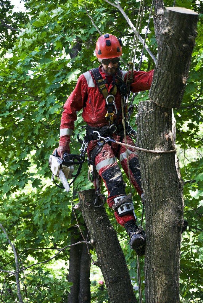 Man preparing tree transplant