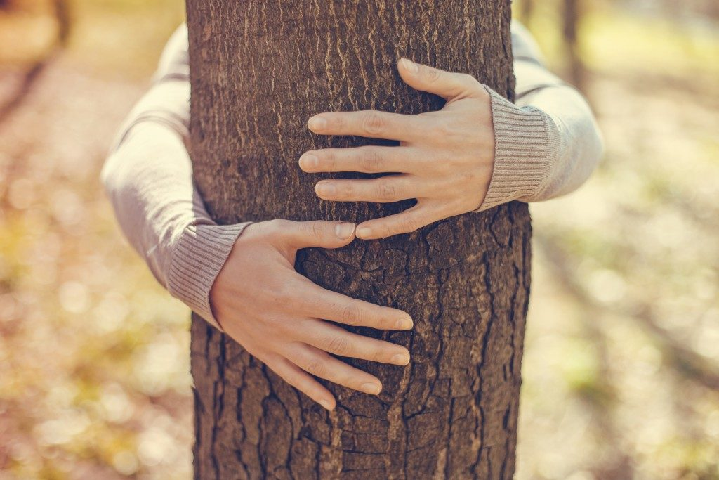 Close-up of hands hugging a tree