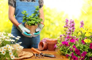 Gardener holding a pot with plant