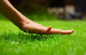 Hand above fresh grass